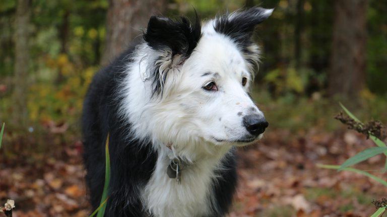Pets & COVID 19 update
